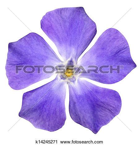 Stock Photography of Purple Flower.