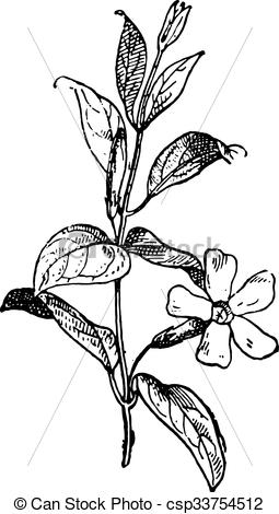 Vinca minor clipart #19