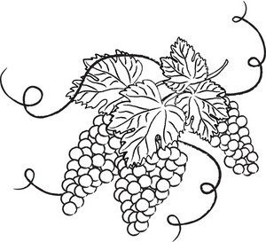 Vine and branches grapes clip art images s.