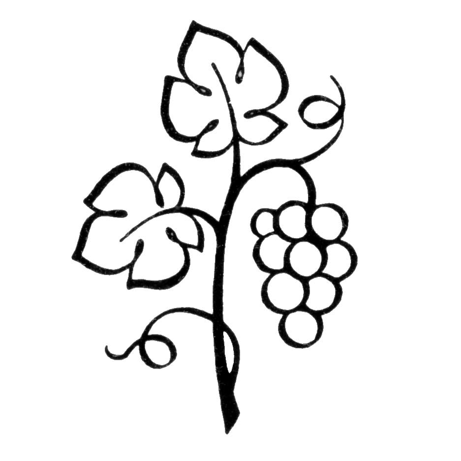 Vines and branches clipart.