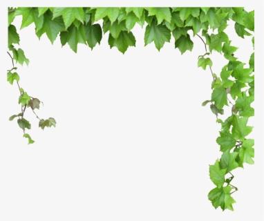 Free Vine Clip Art with No Background.
