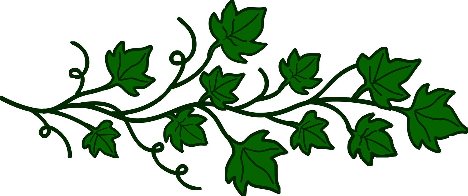 Free Vine Cliparts Transparent, Download Free Clip Art, Free.