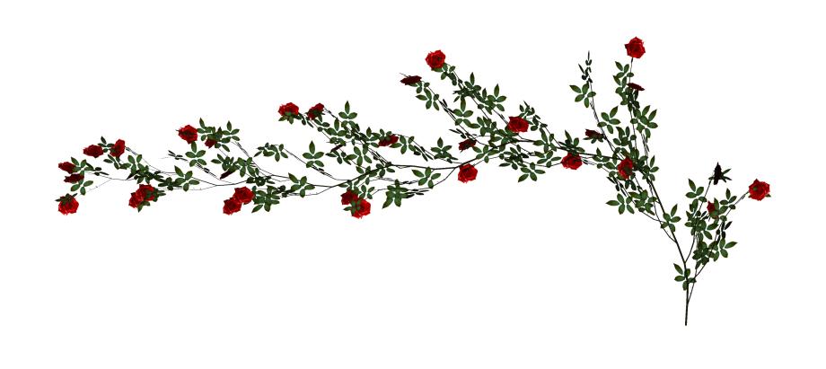 Transparent Rose Vine Clipart.
