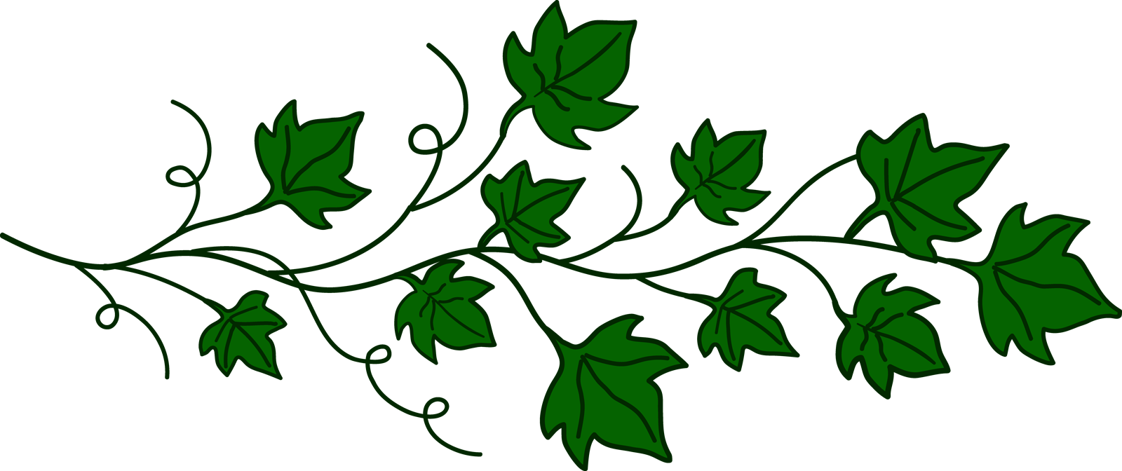 Vine Ivy Clip art.