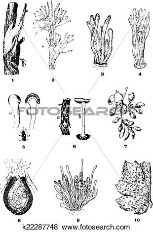 Clip Art of Diseases of the vine, vintage engraving. k22287748.