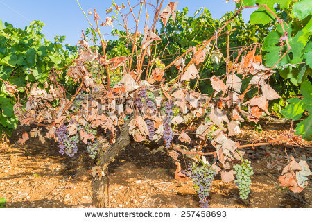 "plant Diseases"" Stock Photos, Royalty."
