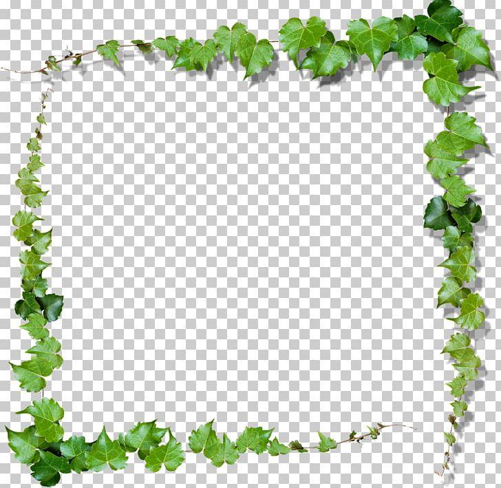 Green Vine PNG, Clipart, Arbel, Border, Branch, Clip Art.