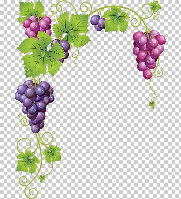 Common Grape Vine Wine , grape, pink and purple grapes.