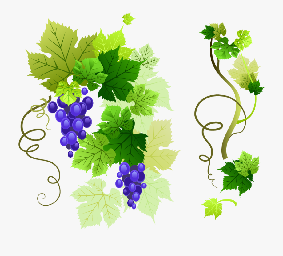 Common Grape Leaves Clip Art Png Vector.