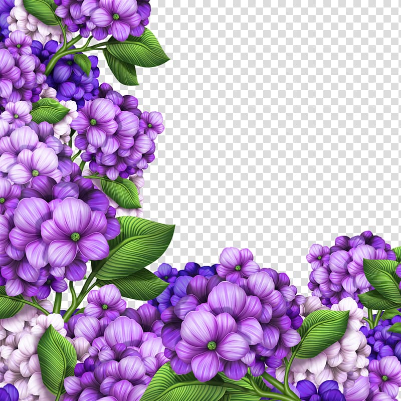 Purple petaled flowers illustration, Hydrangea Flower.