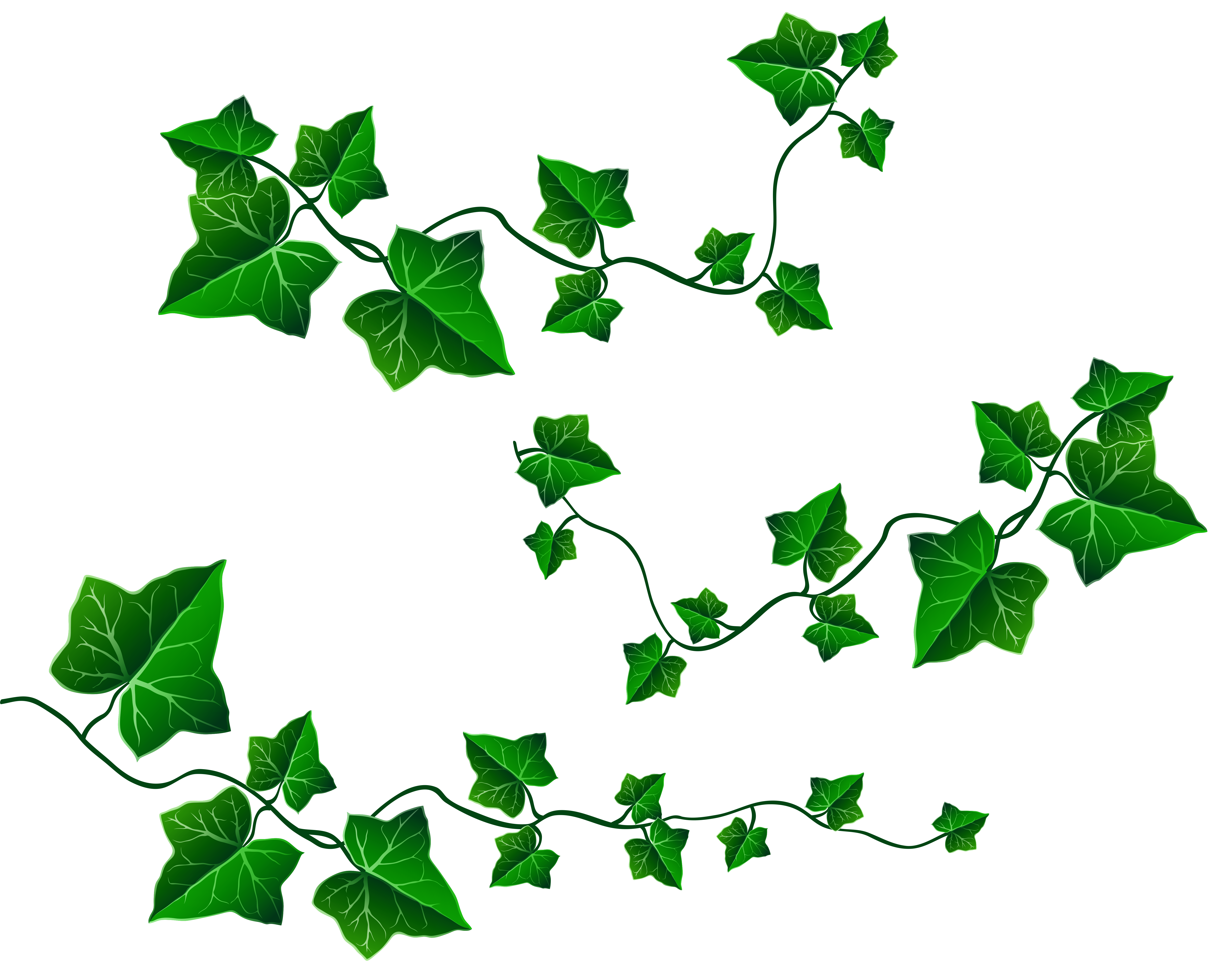 Vine Leaves Decoration PNG Clipart Picture.