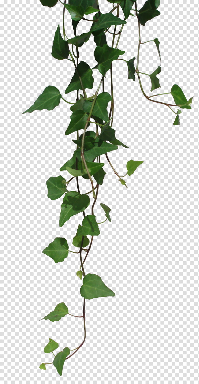 RNDOM, green vines transparent background PNG clipart.