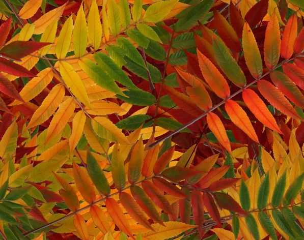 1000+ ideas about Fall Leaves Background on Pinterest.