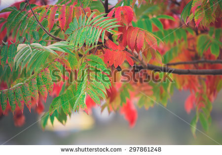 Red Tree Stock Photos, Royalty.