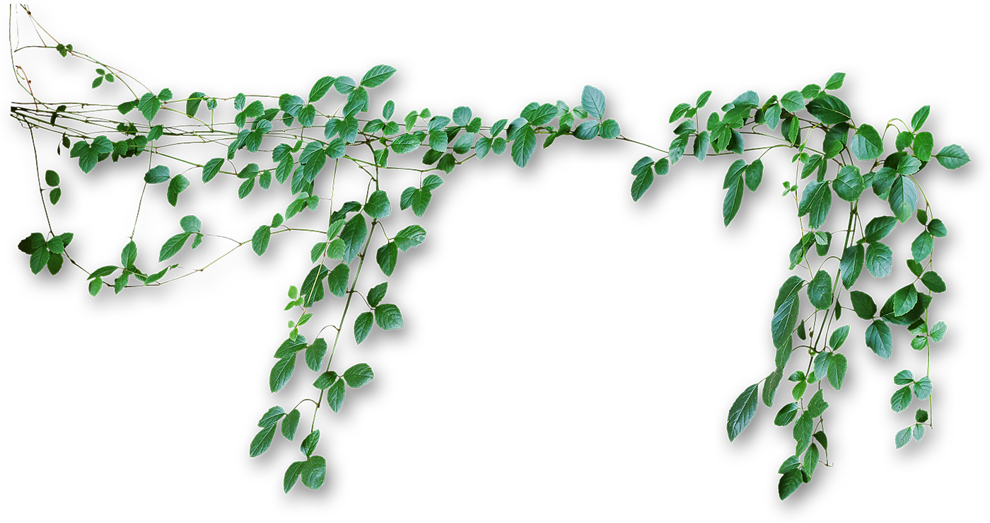 Vines png #43677.