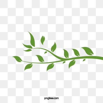 Vine Leaves Png, Vector, PSD, and Clipart With Transparent.