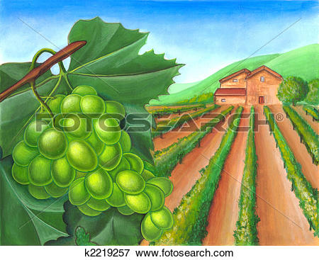 Vineyard Illustrations and Clip Art. 1,172 vineyard royalty free.