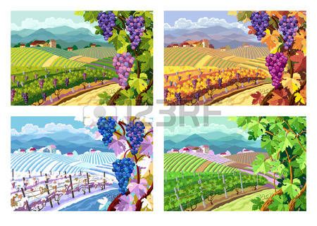 7,361 Vineyard Stock Illustrations, Cliparts And Royalty.