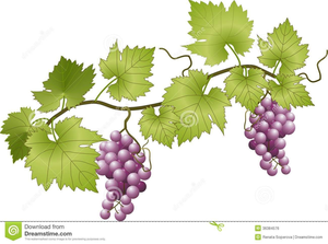 Grapes Vineyard Clipart.