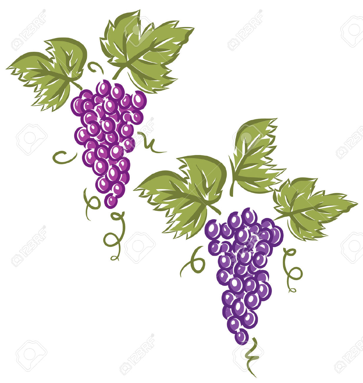 Vineyard Clipart Vector.