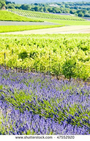 Provence Wine Stock Photos, Royalty.