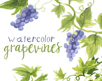 Watercolor grapes.
