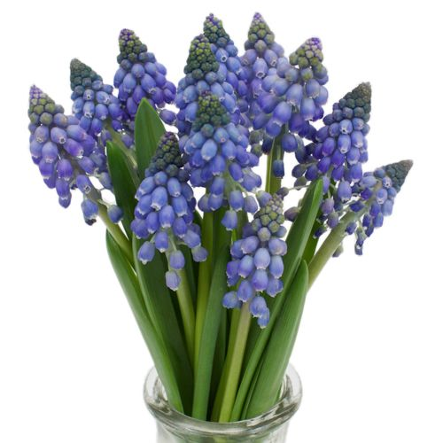 1000+ ideas about Muscari Wedding Bouquet on Pinterest.
