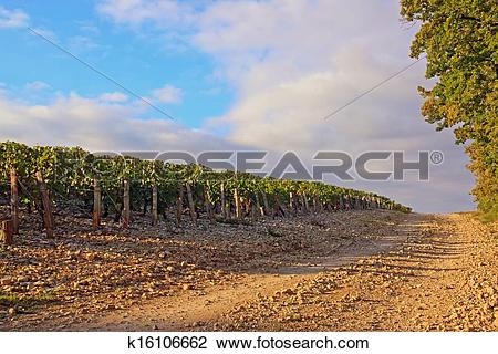 Clip Art of Rocky way near vineyards, Burgundy k16106662.