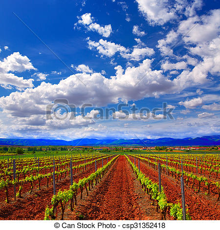 Stock Photography of La Rioja vineyard fields in The Way of Saint.