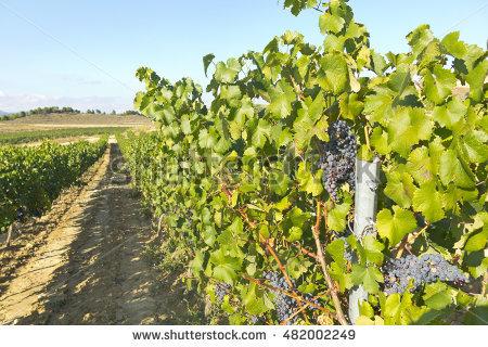 Rioja Stock Photos, Royalty.