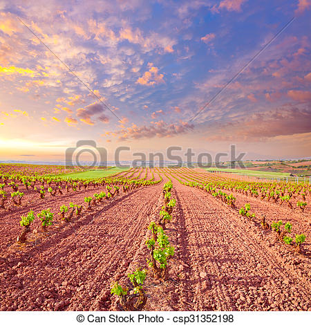 Stock Photographs of La Rioja vineyard fields in The Way of Saint.
