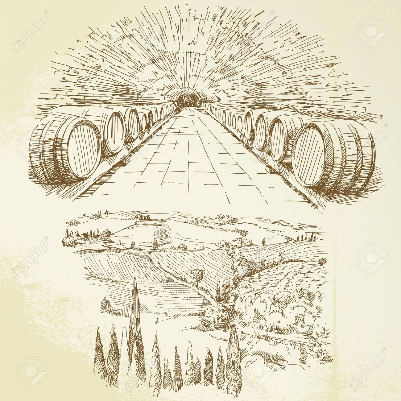 Wine vineyard clipart.