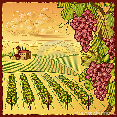 Vineyard Stock Illustrations.