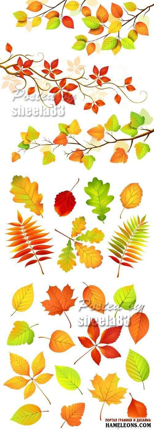 1000+ images about растения on Pinterest.