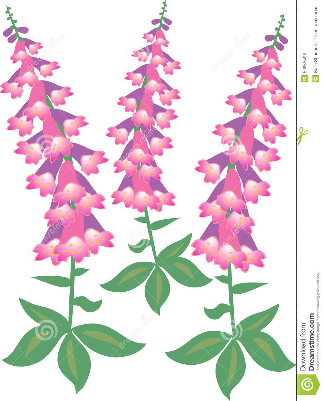 Van De Digitalis (purpurea Van Het Vingerhoedskruid) De Bloesem.