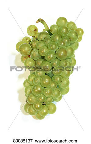 Picture of DEU, 2004: Common Grape Vine, Grape, Vine (Vitis.