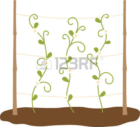 3,122 Plant Tendril Cliparts, Stock Vector And Royalty Free Plant.