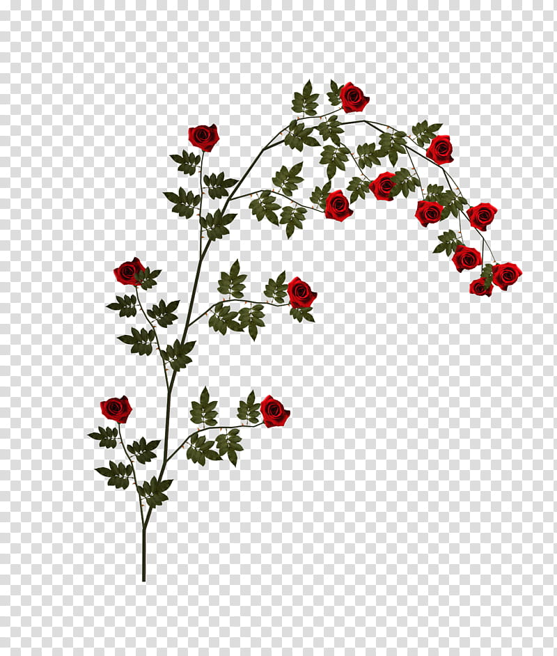 D Climbing Roses, red flowers illustration transparent.