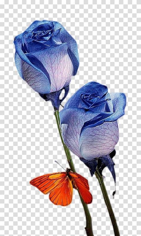 Blue rose Flower bouquet Nosegay, Free blue bouquet creative.