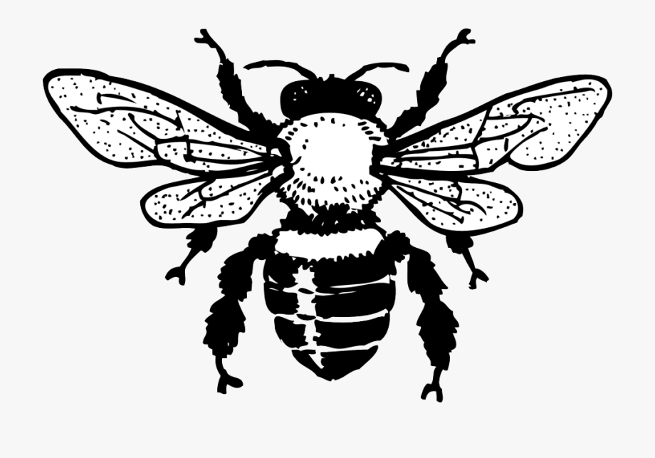 Bee Coloring Page 0001 Q1.
