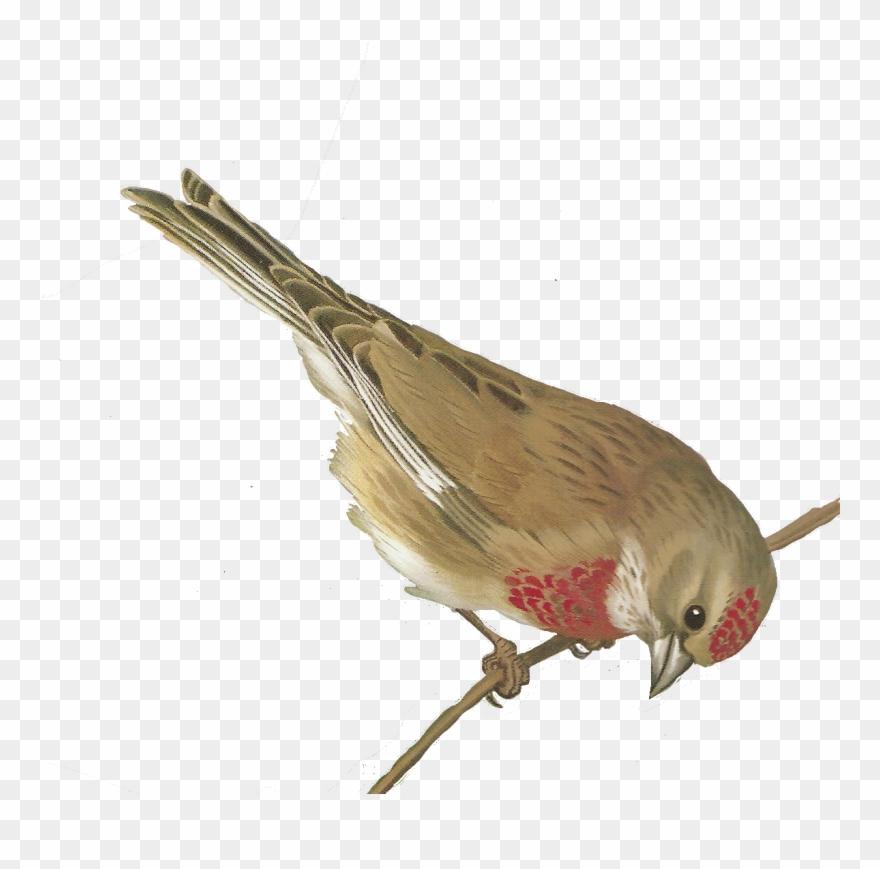 Free Bird Images.