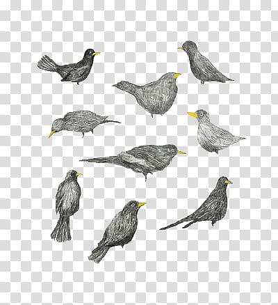 Vintage Birds, gray birds illustration transparent.