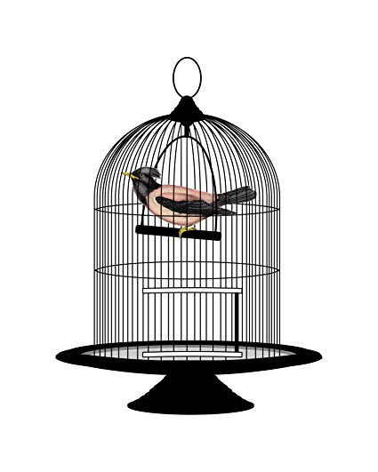 Amazon.com: Home Comforts Laminated Poster Bird Vintage.