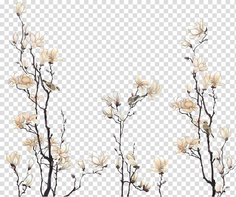 Flores vintage, white magnolia flowers in bloom transparent.