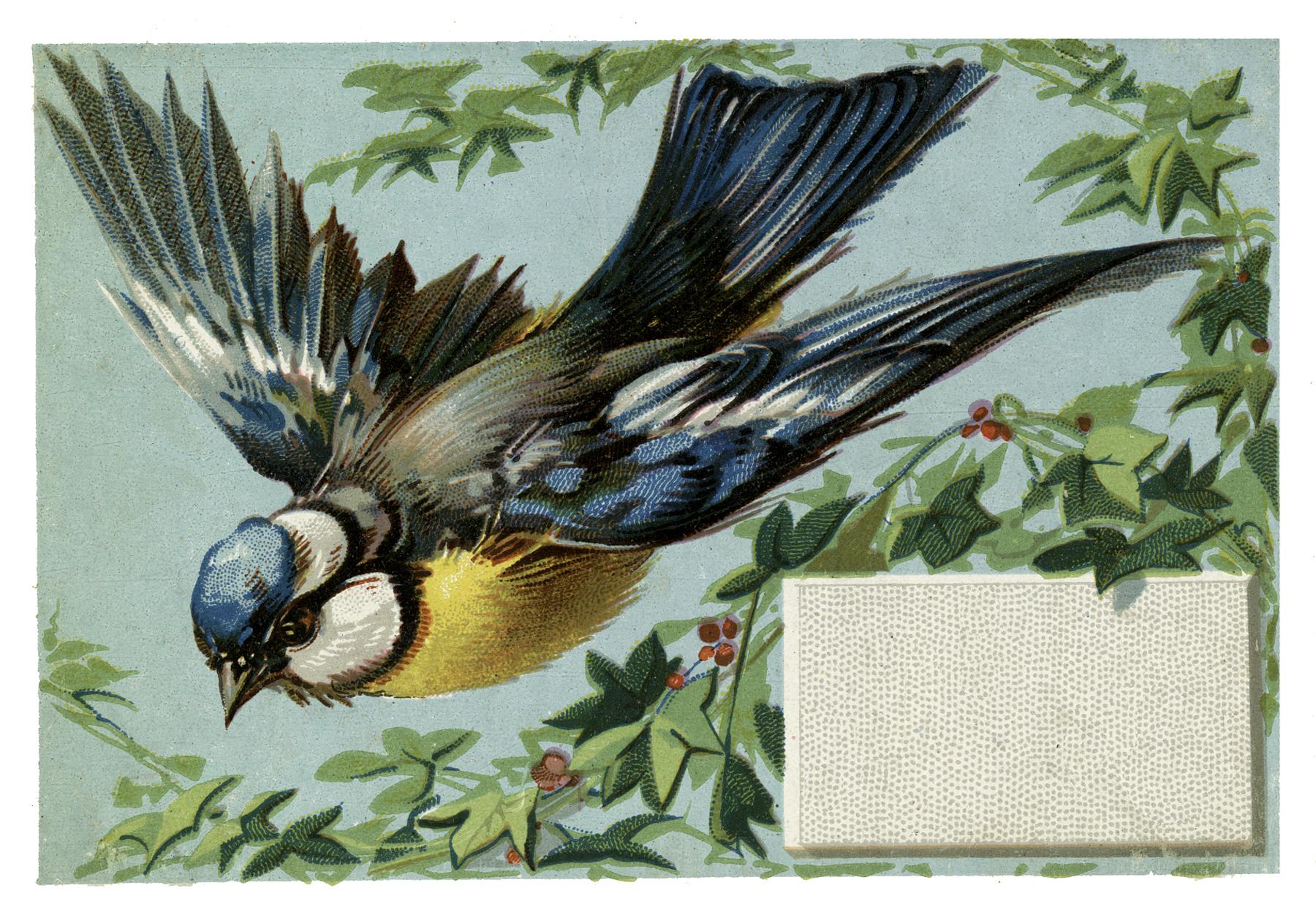 11 Bluebird Images.