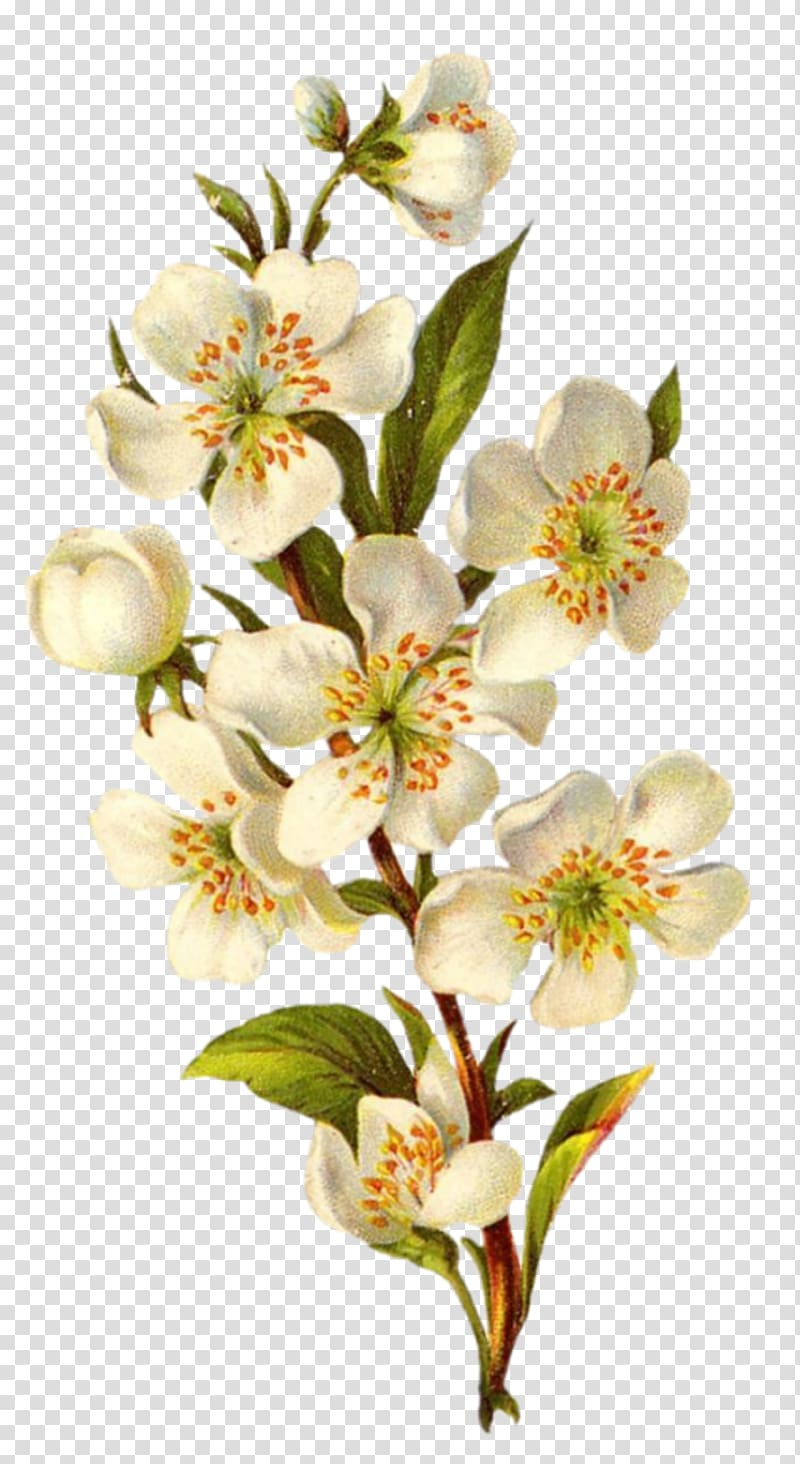 White petaled flowers illustration, Flower Vintage clothing.