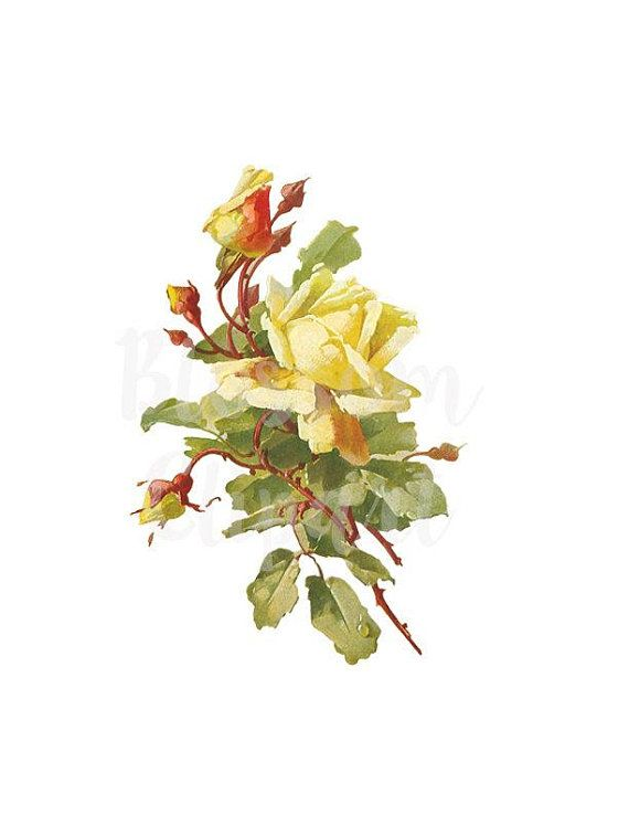 Yellow Rose CLipart Rose Vintage Rose Clipart Digital.