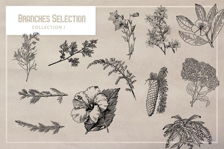 Vintage Branches Illustrations.