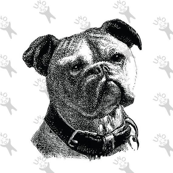 Bulldog Image Instant Download Digital printable vintage.