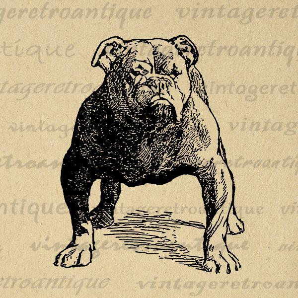 Printable bulldog dog digital image graphic artwork vintage.